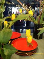 lentebloemen2-nb
